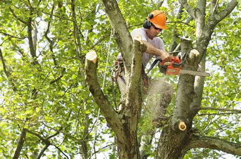 tree trimming houston tree pruning lanzas tree service