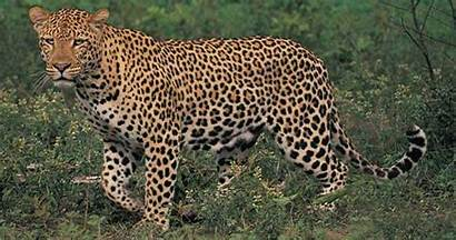 Park National Safari Jock Kruger Lodge Wild