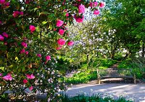 jardin a l39anglaise comment creer un jardin paysager With comment creer un jardin paysager