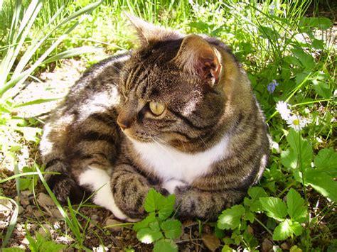 formel  natuerliches zeckenschutzmittel fuer katzen und hunde