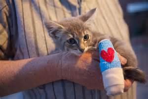PetSmart Adoption Cats
