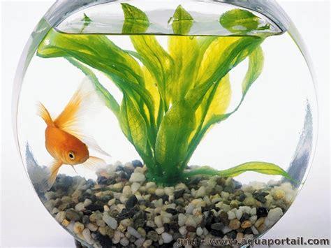 poisson aquarium alimentation reproduction