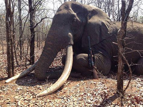 rainer schorr named  hunter  killed africas biggest