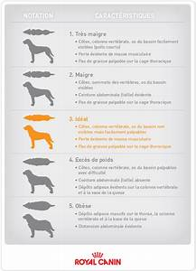 Comment Savoir Si Son Catalyseur Est Bouché : test comment savoir si un chien est il trop gros ~ Gottalentnigeria.com Avis de Voitures