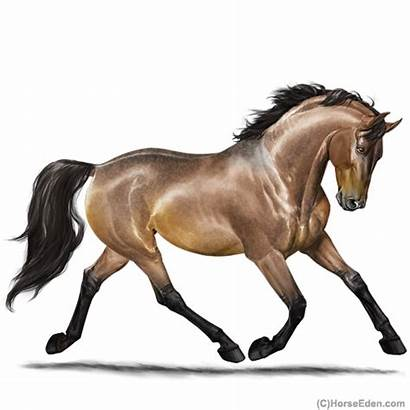 Horse Eden Eventing Horseeden Warmblood Ppp Pep