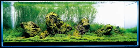 takashi amano nature aquarium aquascapes