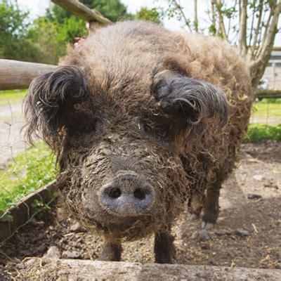 farm animal sanctuary