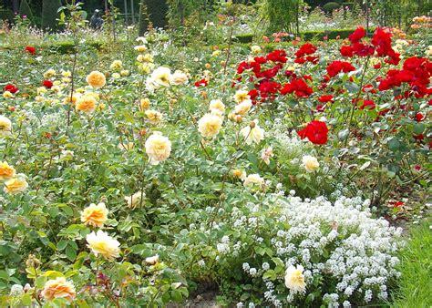 Rosenbeet Anlegen Beispiele by Duftpflanzen F 252 R Den Rosengarten Rosenbegleitpflanzen