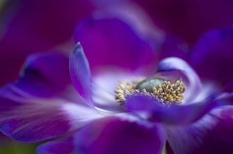 beautiful flora  fauna photography  jacky parker