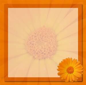 Frame Orange Flower Card Free Stock Photo - Public Domain ...