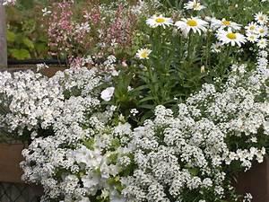 Balkon Ideen Pflanzen : fr hlingsblumen pflanzen balkon raum und m beldesign ~ Lizthompson.info Haus und Dekorationen