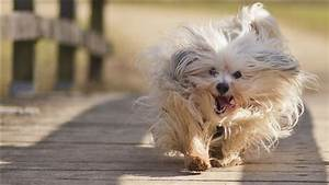 Dog, Puppy, Running, Pic, Download