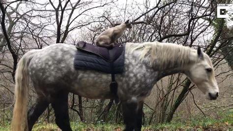 Cat Riding Horse