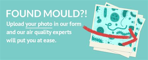 mould detection remediation sick building solutions