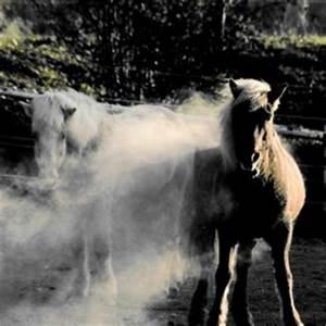 Fruktan und Hufrehe Cushing bei Pferden und Ponys
