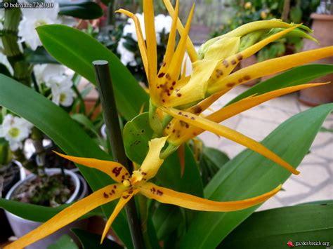 floraisons des orchid 233 es page 5