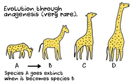 Evolution Definition Biology Examples And Forms