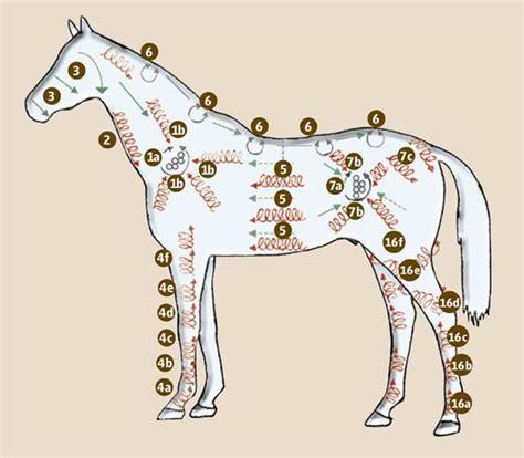 wellness fuer pferde die putzmassage anatomia horses