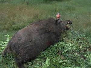 Monster Hog killed near Cut and Shoot, Texas | Outdoor ...
