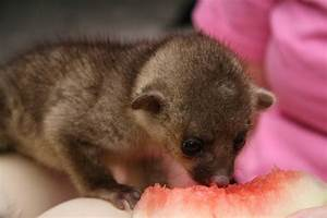 Top 5 Cute and Cuddly Exotic Pets - Animal's Look