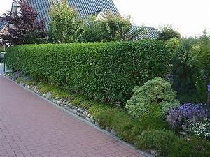 Garten Günstig Einzäunen : heckenpflanzen bieten schutz vor neugierigen blicken ~ Michelbontemps.com Haus und Dekorationen