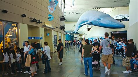 aquarium of the pacific in los angeles california expedia