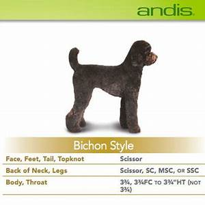 Andis Poodle Chart 95 Best Become A Pet Groomer How To Images On Pinterest