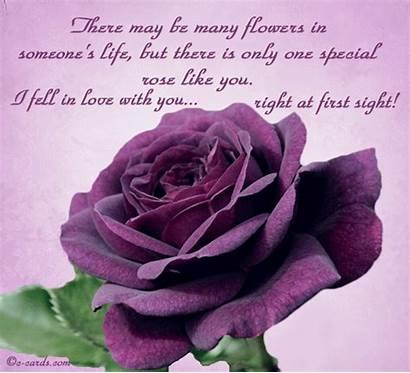 Sight Purple Rose Greeting Loving Cards Card