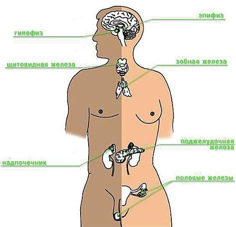 фото болезней мужских болезней