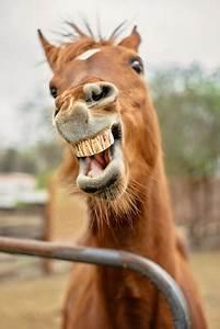 Taking Care Of A Horse U0026 39 S Teeth
