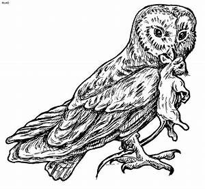 Barn Owl Coloring Pages For Adults – Color Bros