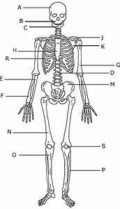 Animal Worksheet  New 742 Animal Bones Worksheet