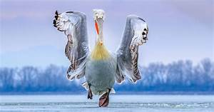 See the Winners of the 2019 Bird Photographer of the Year Contest