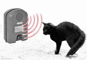 ultraschall katzenschreck abwehrgerate With französischer balkon mit katzen aus garten fernhalten
