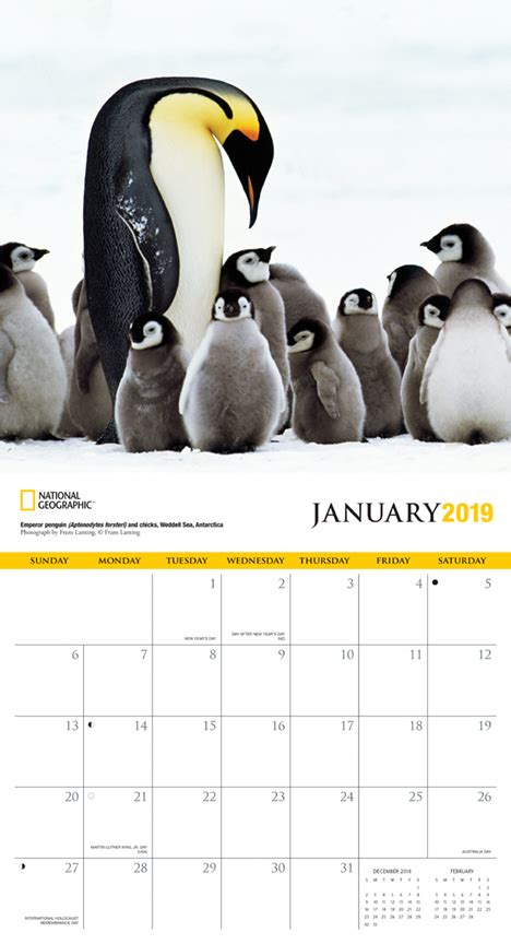 penguins zebrapublishing