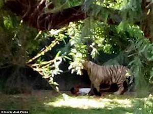 'Drunk' man killed by white tiger at New Delhi Zoo after ...