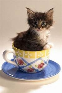 17 Best images about Cup of Cute on Pinterest | Cats, Baby ...