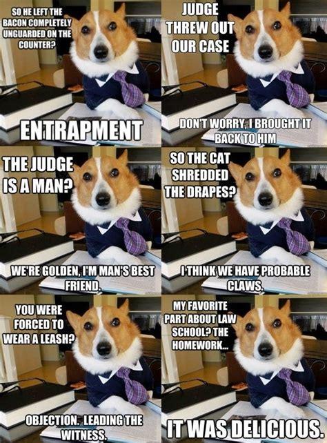 Law Dog Meme - man s best lawyer laughs pinterest lawyer humor and meme