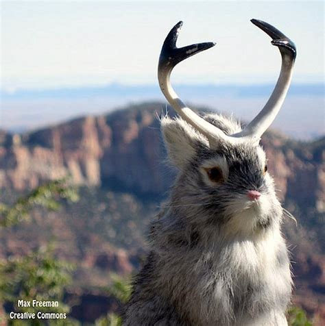 google fiber killer rabbit  tiny bunny