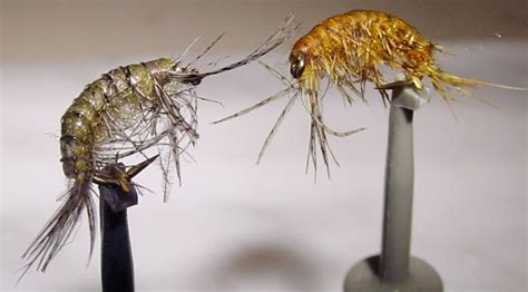 fly tying  dressing effective flies  catching trout