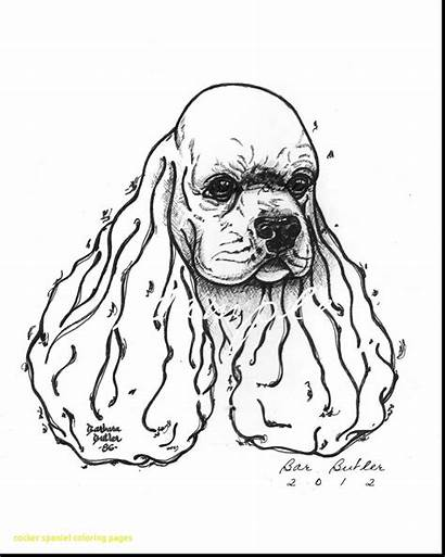 Spaniel Cocker Coloring Pages Drawing Springer English