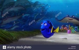 Finding Dory Stock Photos & Finding Dory Stock Images - Alamy