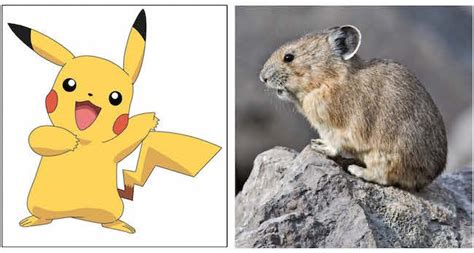 Save The Real Life Pokemon From Climate Change Put A Fee