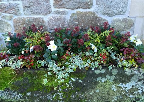 Planting Containers For Winter Colour