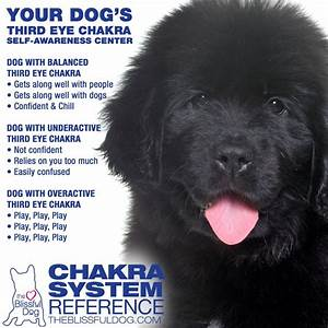 Chakra Healing Chart Dog Chakra Points Chart Energy Healing For Dogs The