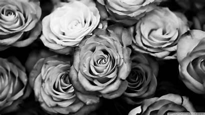 Background Rose Backgrounds Desktop Cool Wallpapertag Iphone
