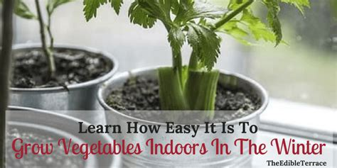 Learn How Easy It Is To Grow Vegetables Indoors In The Winter