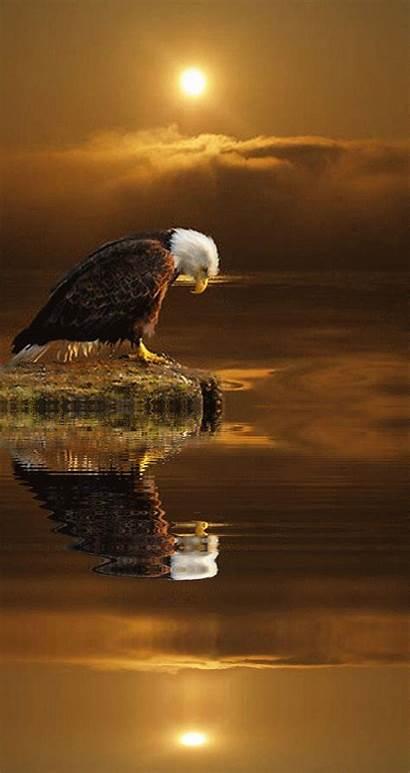 Birds Eagle Pretty Vain Mopar Soar Wings