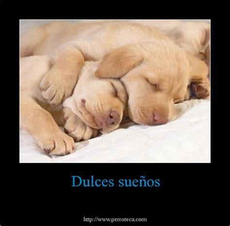 imagenes de perros bonitos  frases