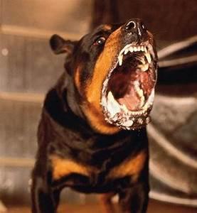 mass dog vaccination to eradicate rabies